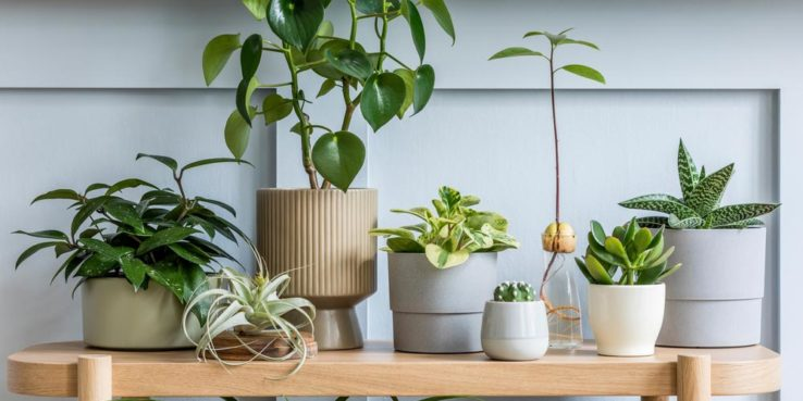 Add-a-Splash-of-Green-to-Your-Home-Decor